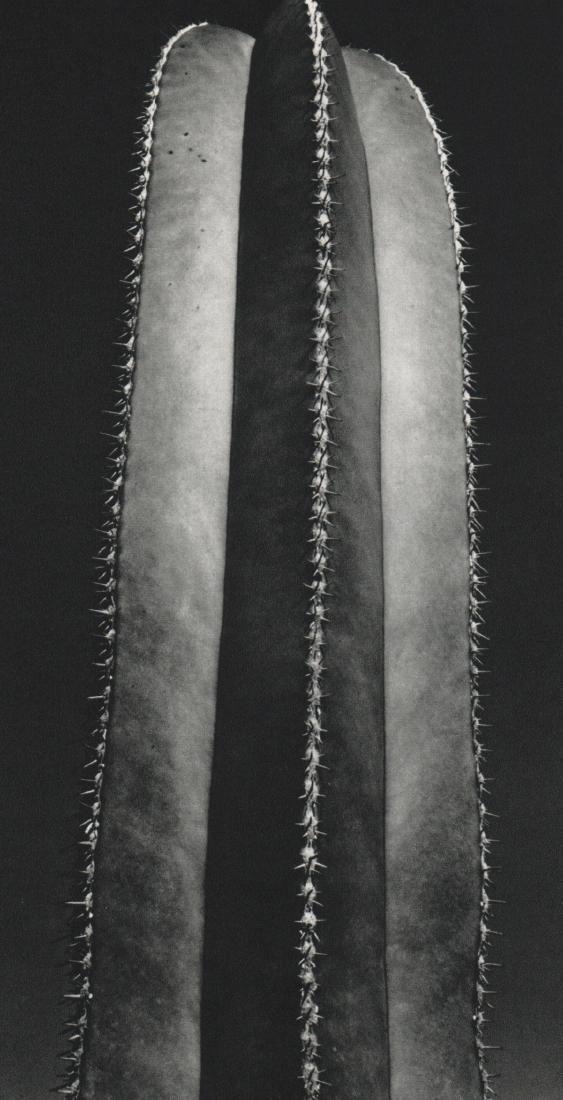 BRETT WESTON - Cactus