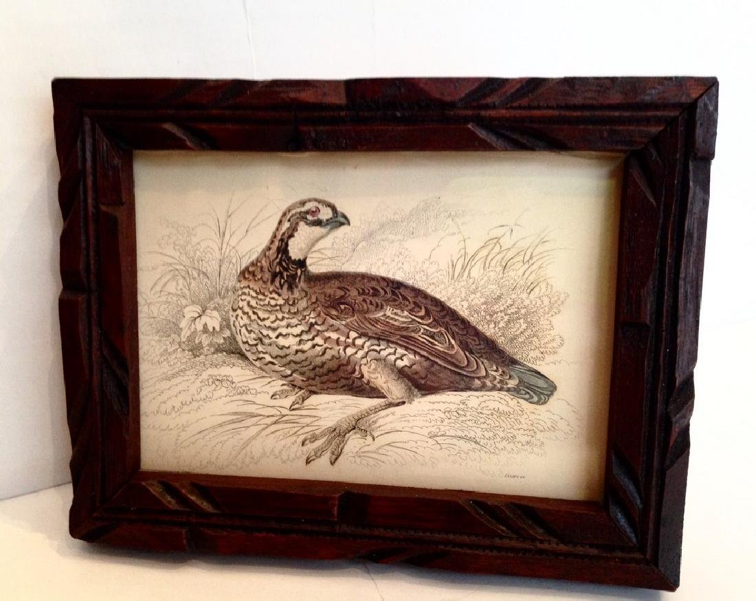 1830s Quail Colored Engraving