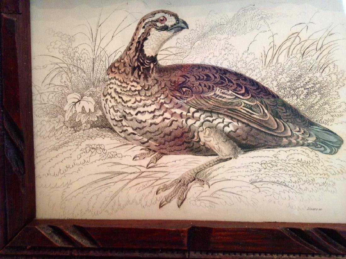 1830s Quail Colored Engraving - 2