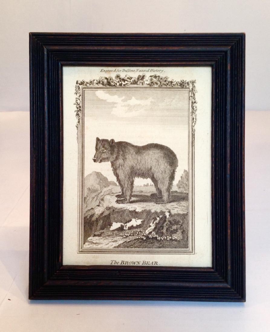 Circa 1800 Engraving of a Brown Bear