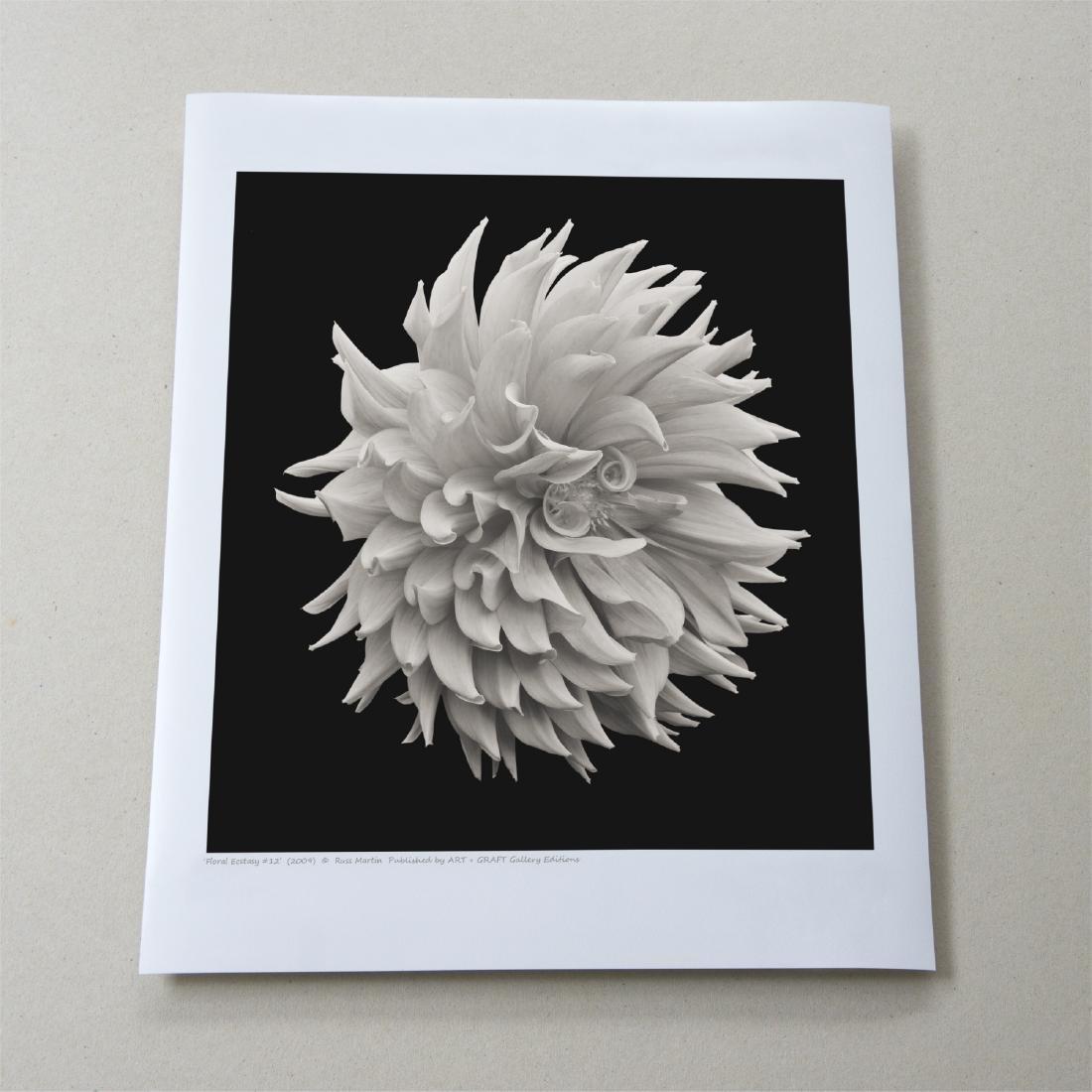 Russ Martin - Print - Floral Ecstasy #12 - 2