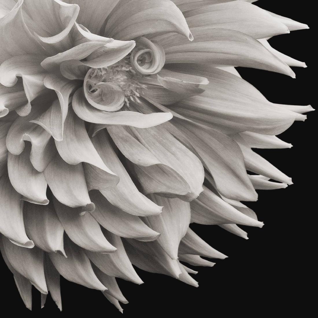 Russ Martin - Print - Floral Ecstasy #12 - 5