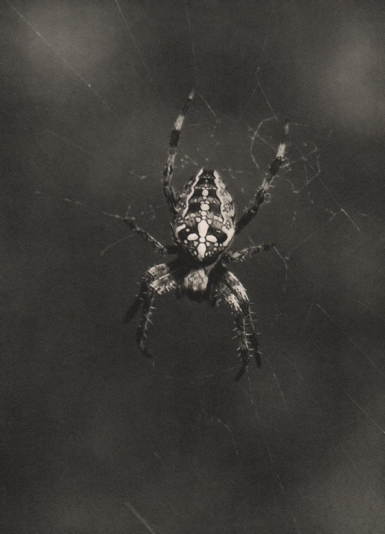 FRANZ SCHINDLER - Spider