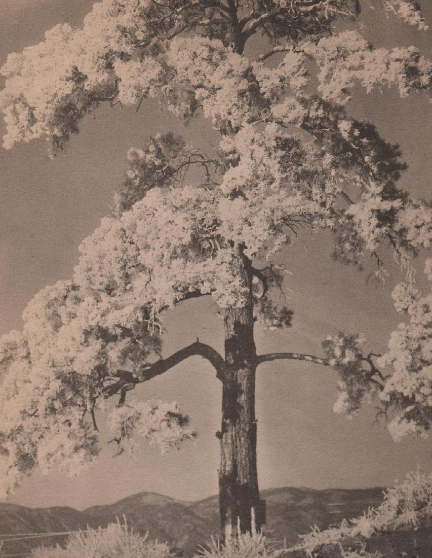 LAURA GILPIN - The Frosted Pine Tree