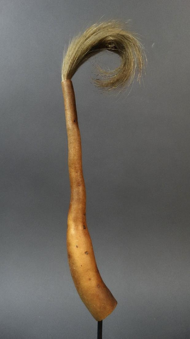 Penis Gourd, Koteka - Dani People