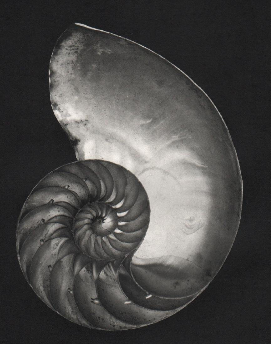 EDWARD WESTON - Nautilus