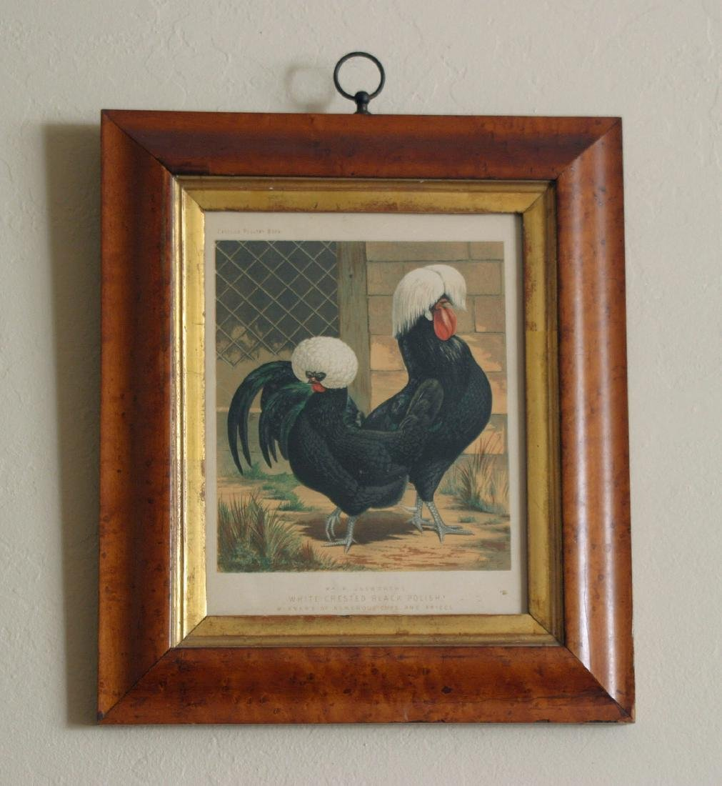 Early Rooster Print in Maple Frame