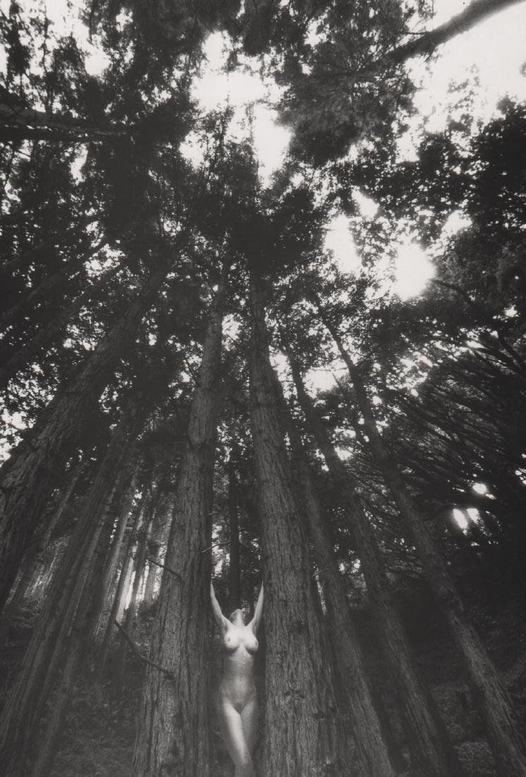 LUCIEN CLERGUE -  Nude with Trees, Big Sur
