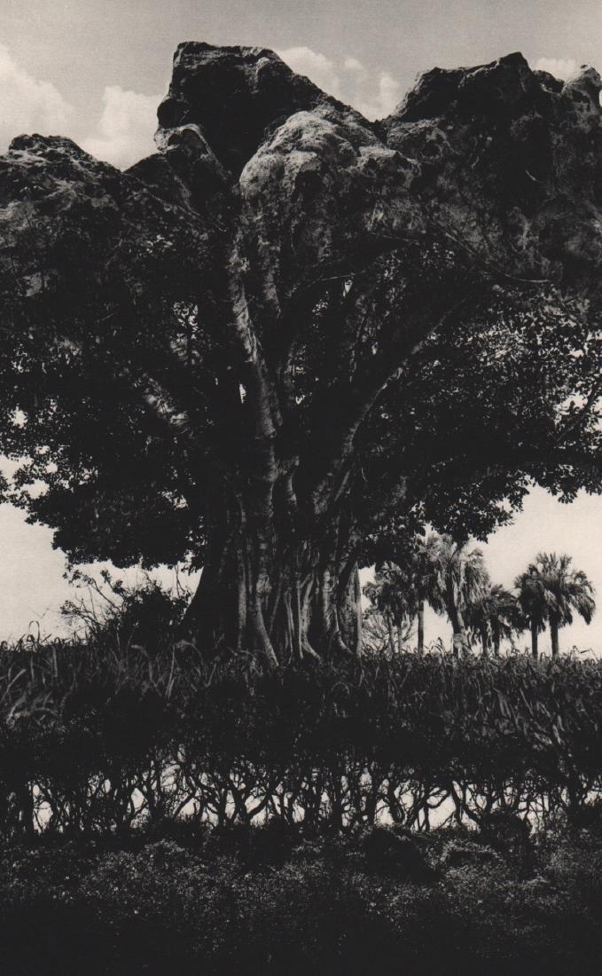 JERRY UELSMANN - Surrealist Exposure