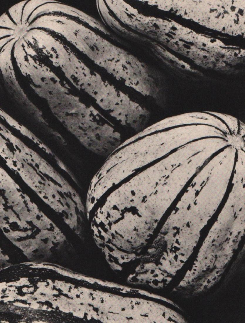 EDWARD WESTON - Gourds