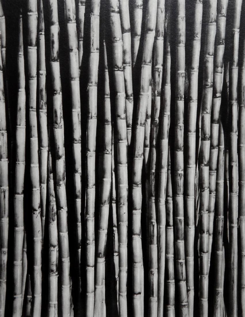 TINA MODOTTI - Bamboo stems 1926