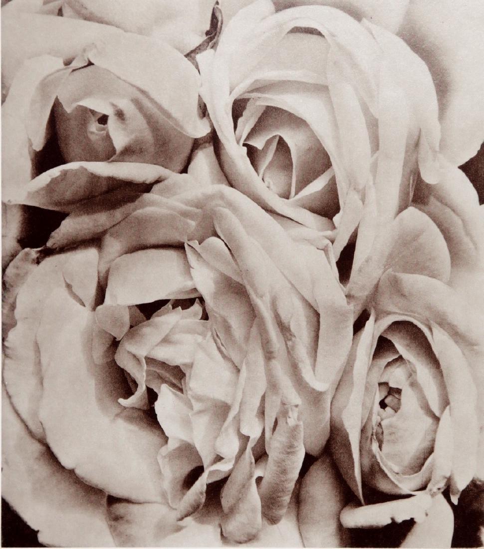 TINA MODOTTI - Roses 1925