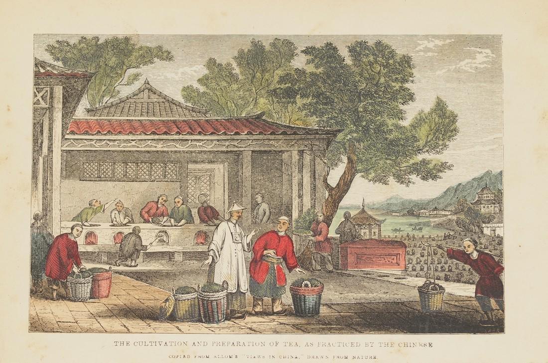 Cultivation Preparation Tea China 1850 Chromolithograph