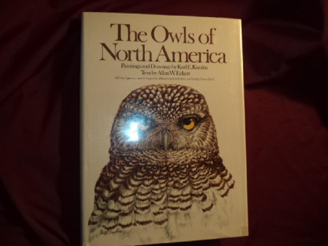 Owls North America (North Mexico) Species & Subspecies
