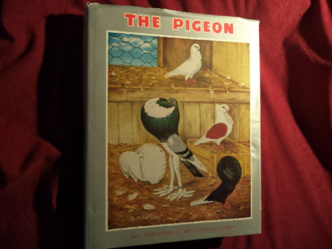 The Pigeon.
