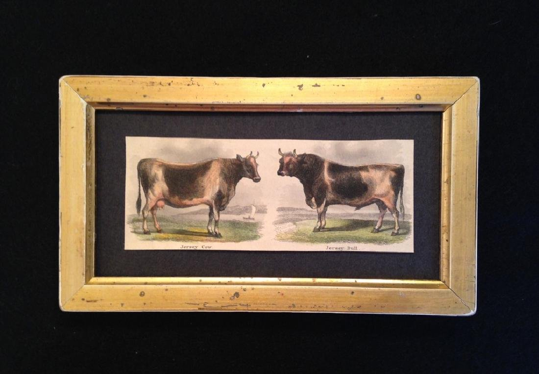 Cow & Bull Hand Colored Engraving 1830's