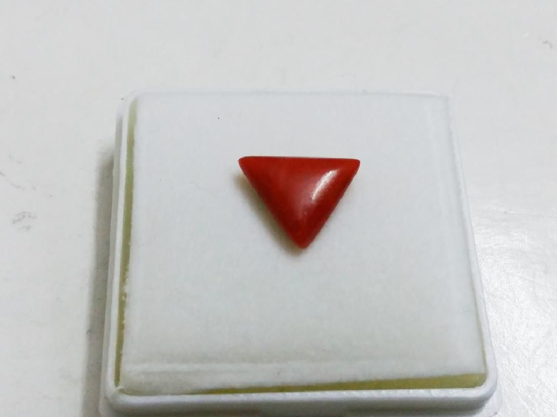 Natural Triangle Coral