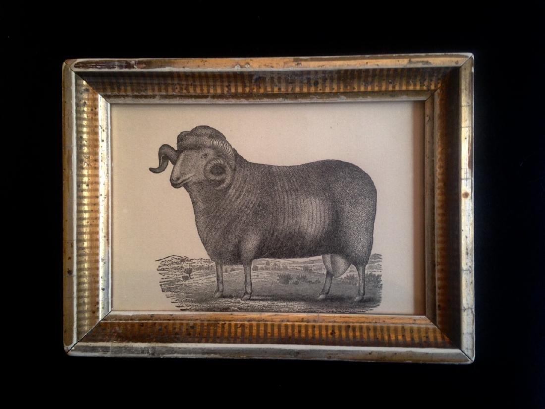 19thc Sheep Engraving