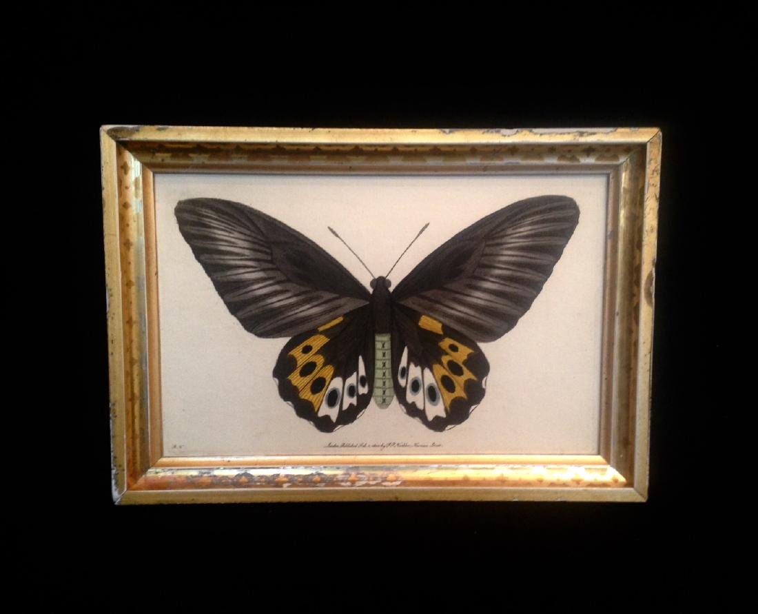 Dated 1800 Hand Colored Butterfly Watercolor