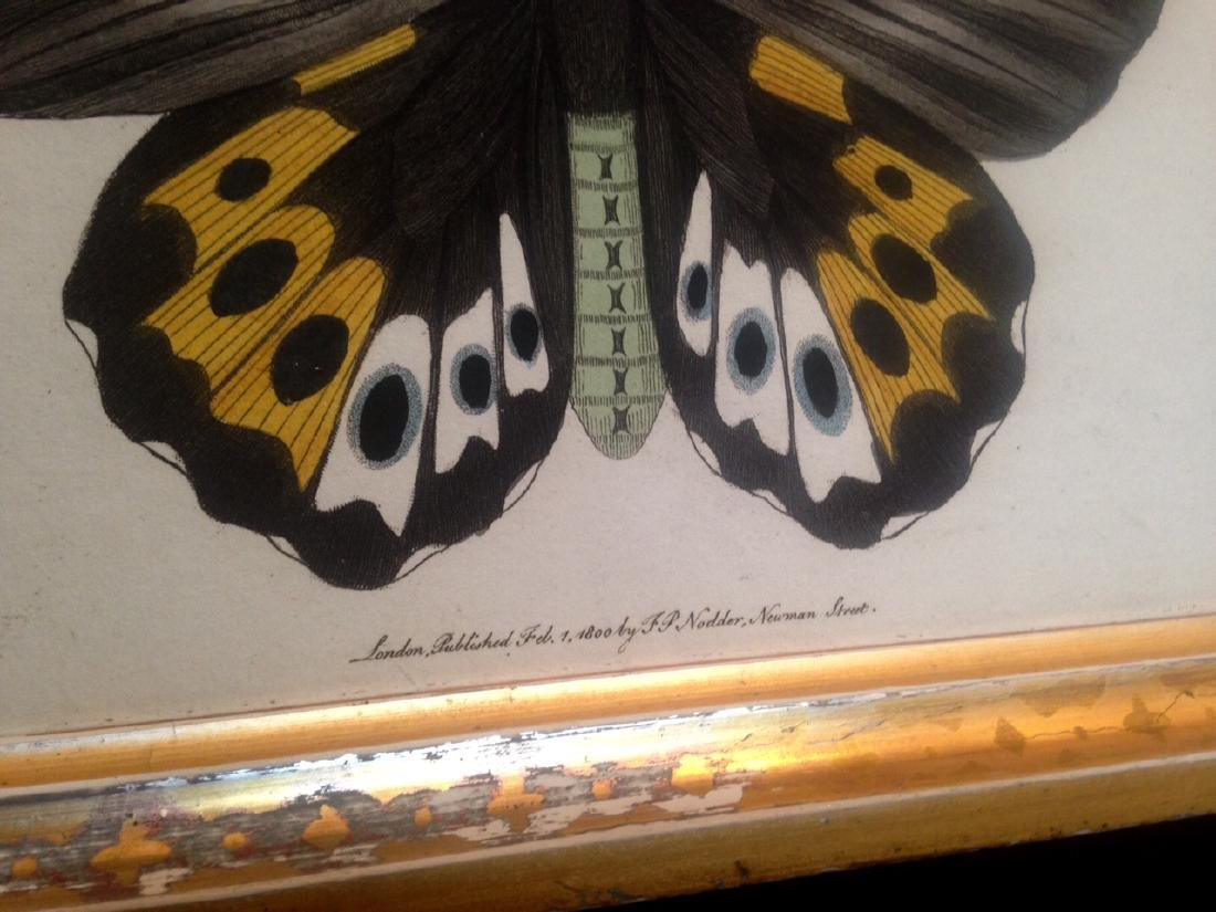 Dated 1800 Hand Colored Butterfly Watercolor - 2