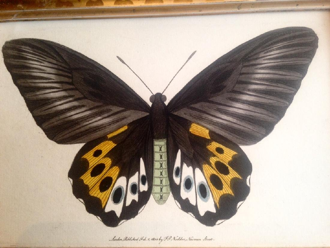 Dated 1800 Hand Colored Butterfly Watercolor - 3