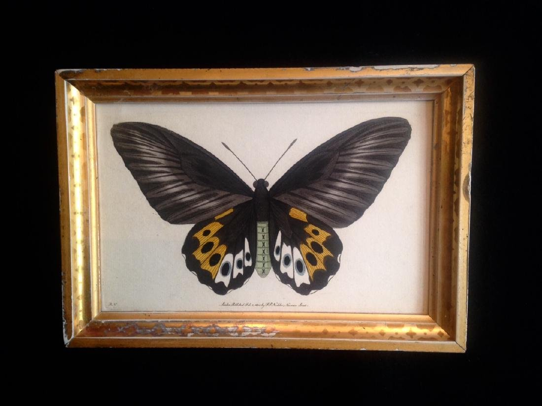 Dated 1800 Hand Colored Butterfly Watercolor - 4