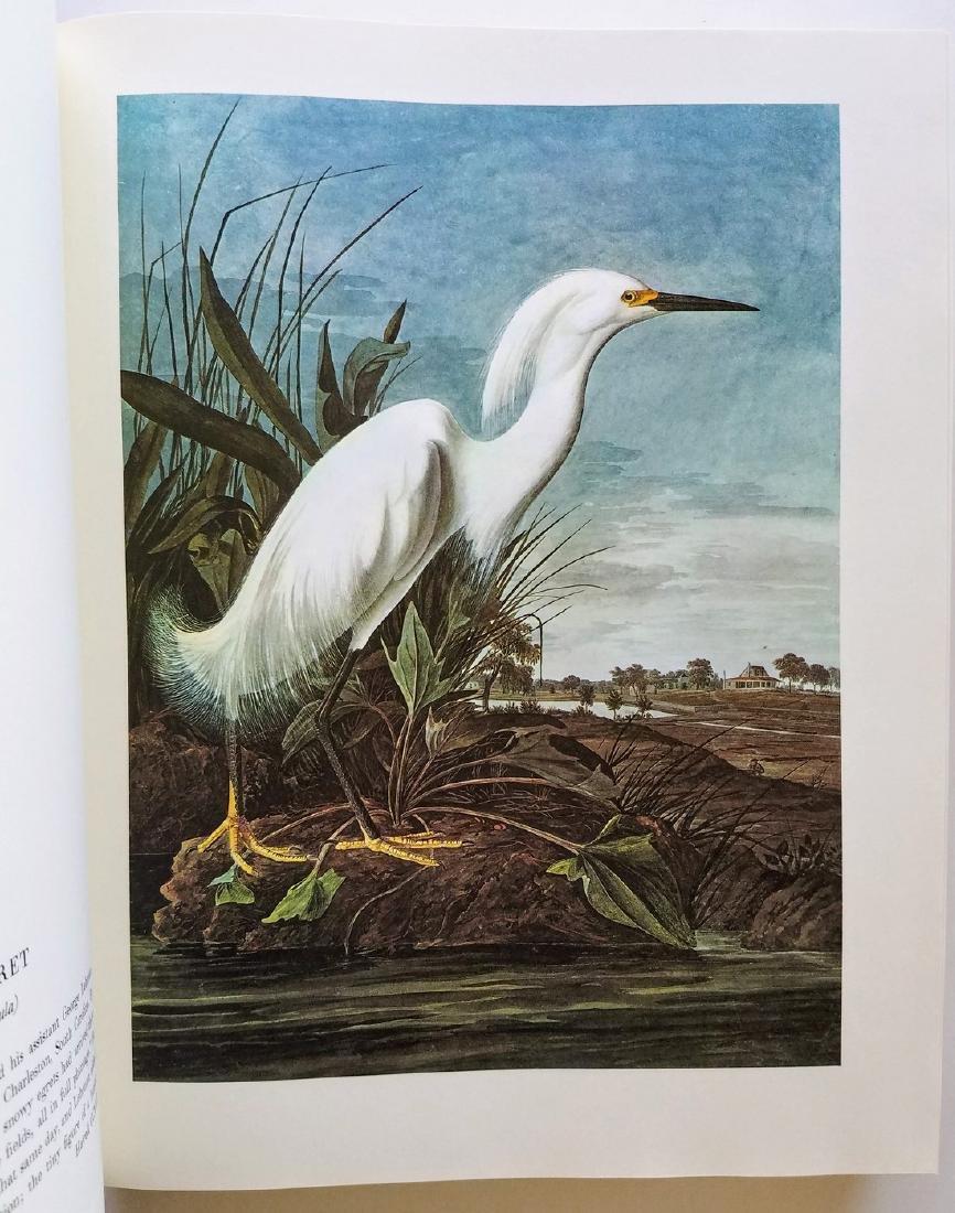 The Original Watercolor Paintings by John James Audubon - 2
