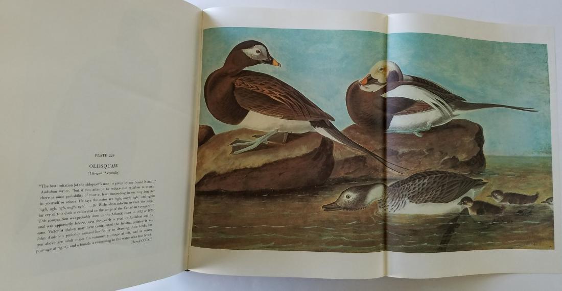 The Original Watercolor Paintings by John James Audubon - 3