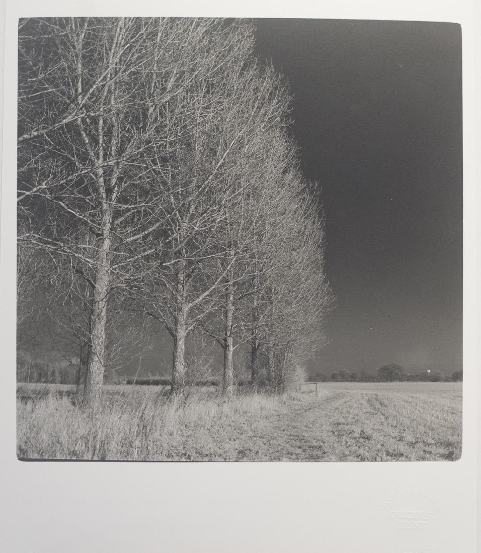 Paul Cooklin West Thorpe I Suffolk 2013 Infrared Photo - 2