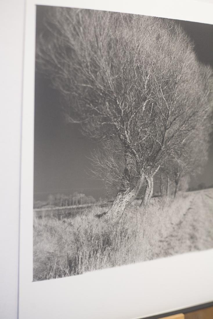 Paul Cooklin West Thorpe IV Suffolk 2013 Infrared Photo - 5