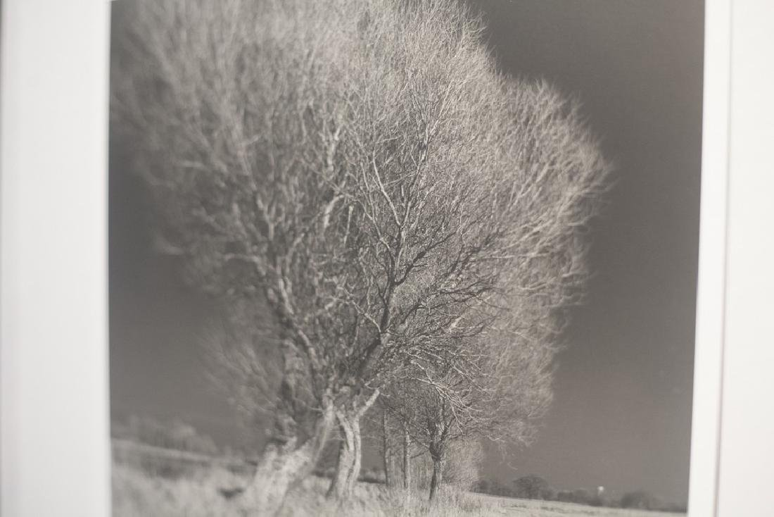 Paul Cooklin West Thorpe IV Suffolk 2013 Infrared Photo - 6