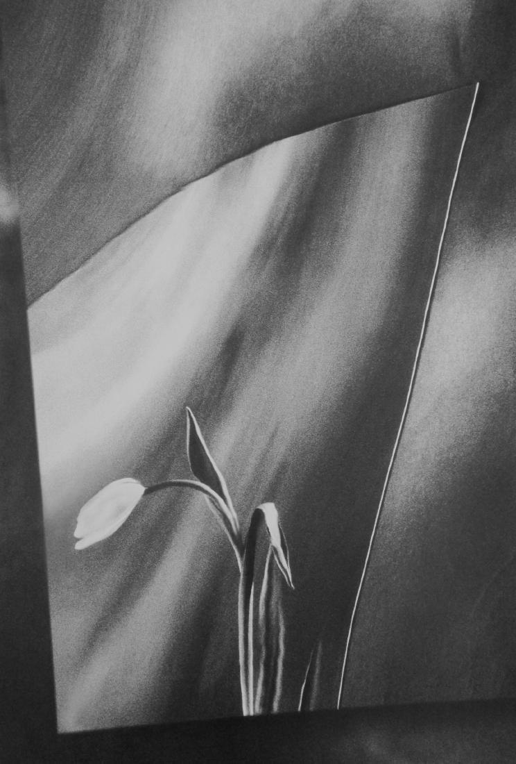 Art Grafts Print Warped Tulip