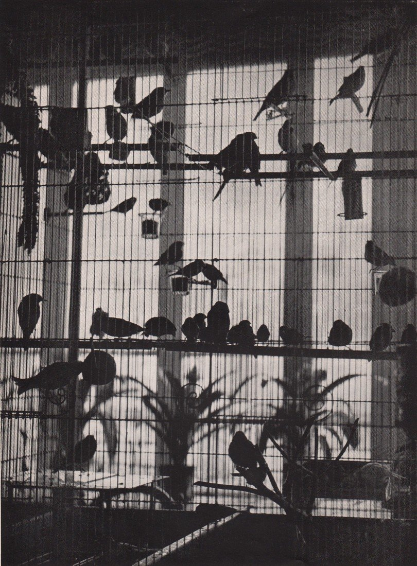 BRASSAI Photograph of Many Birds in Cage