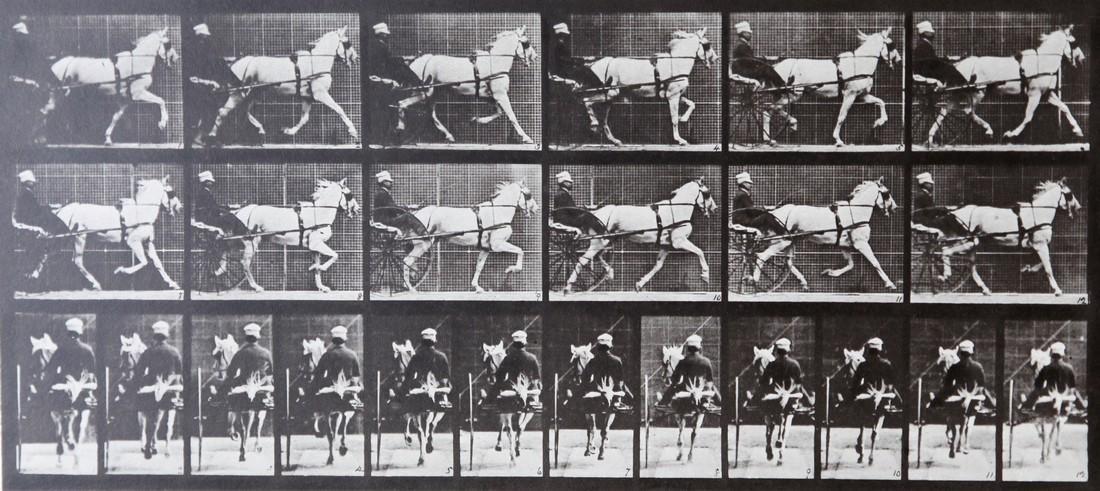 EADWEARD MUYBRIDGE - Horse with carriage AL 671