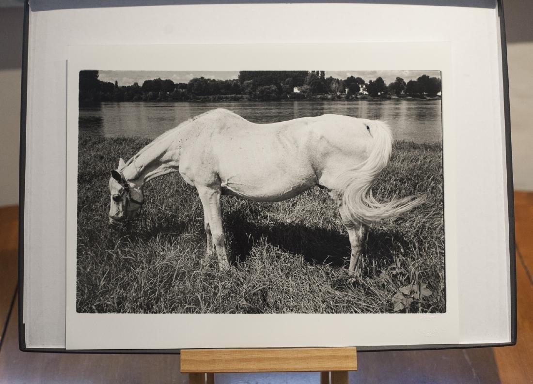 Paul Cooklin (1971-) AP White Horse Candes Saint Martin