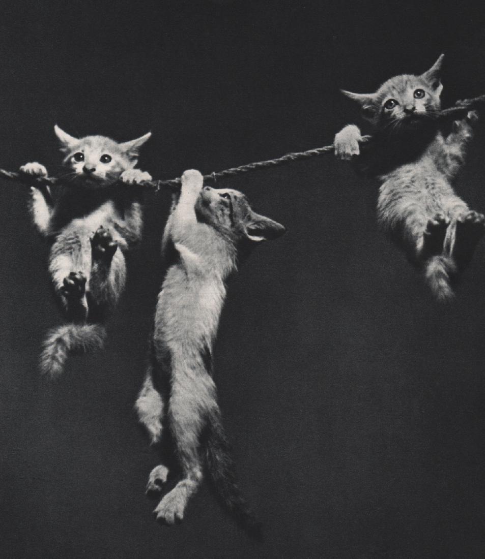 B. L. SHARMA - Kittens After All