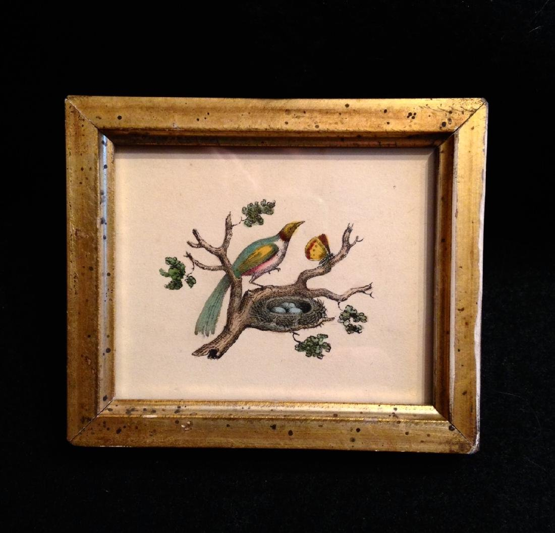 C1840 Hand Colored Bird Engraving