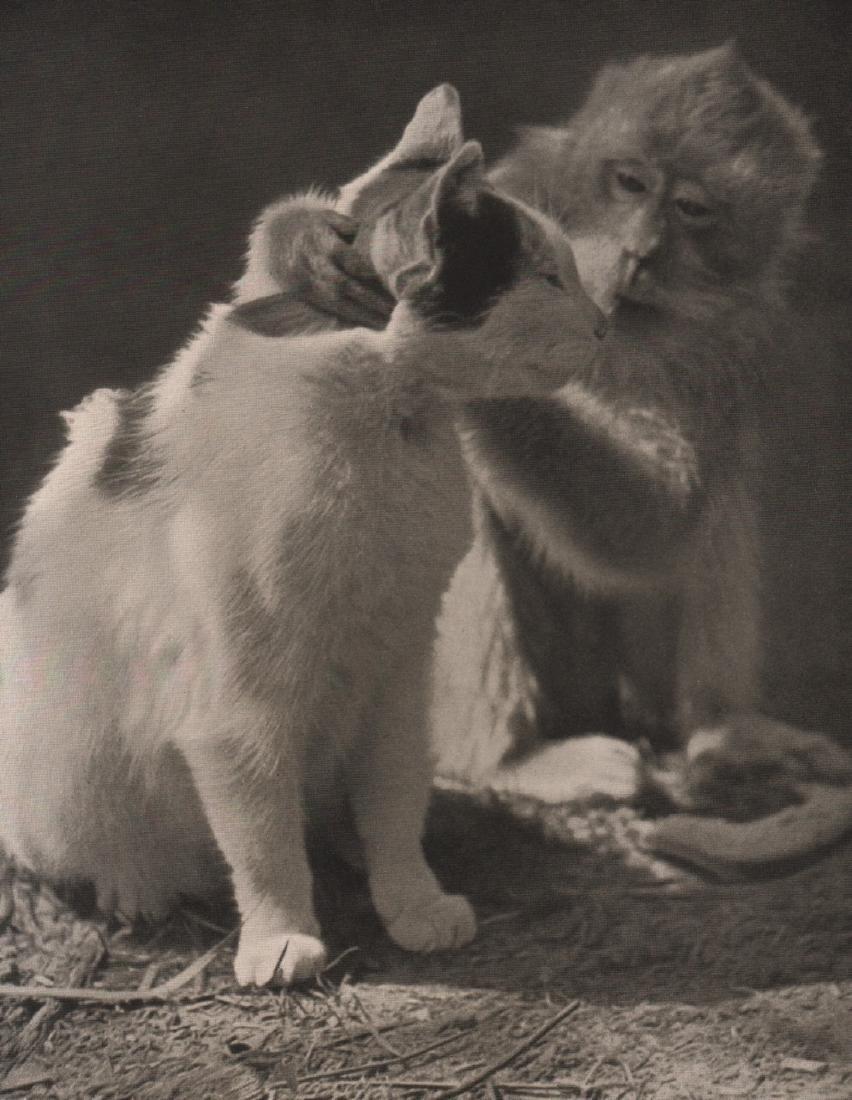 XAVER BODO FRIEHERR V.OST- Monkey with Cat
