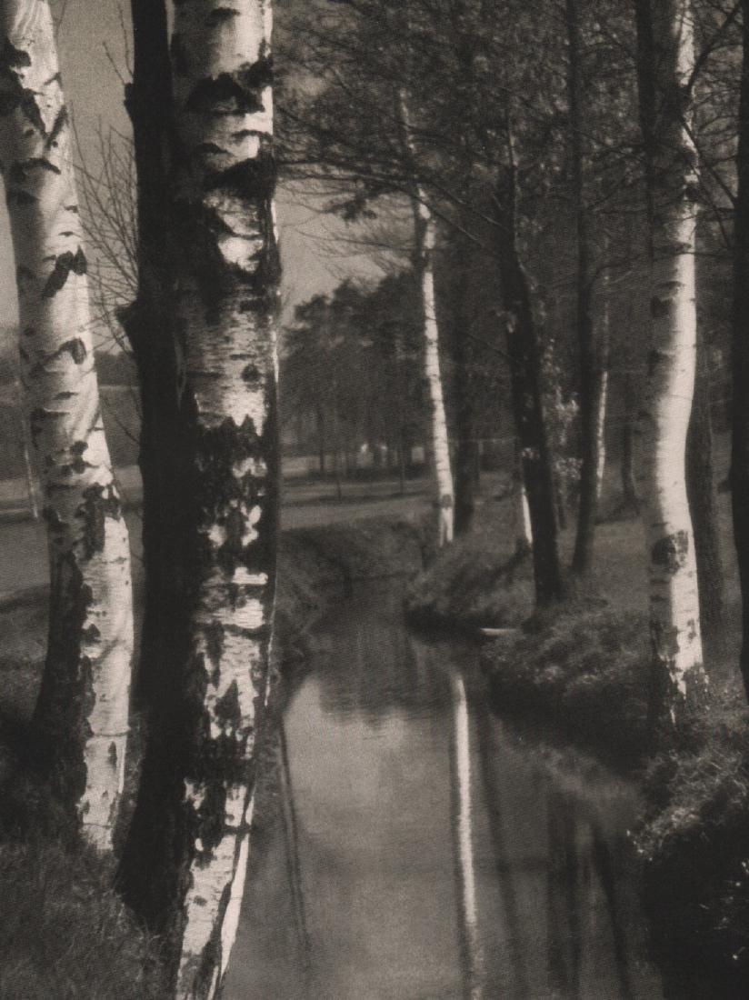 OTHMAR PAUDLER - Birch Trees