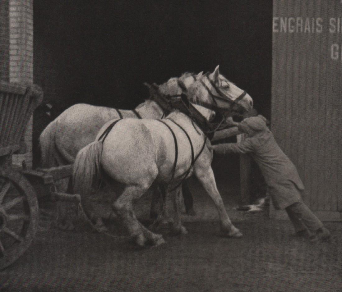 RUDOLF PESTALOZZI- Normandy Horses