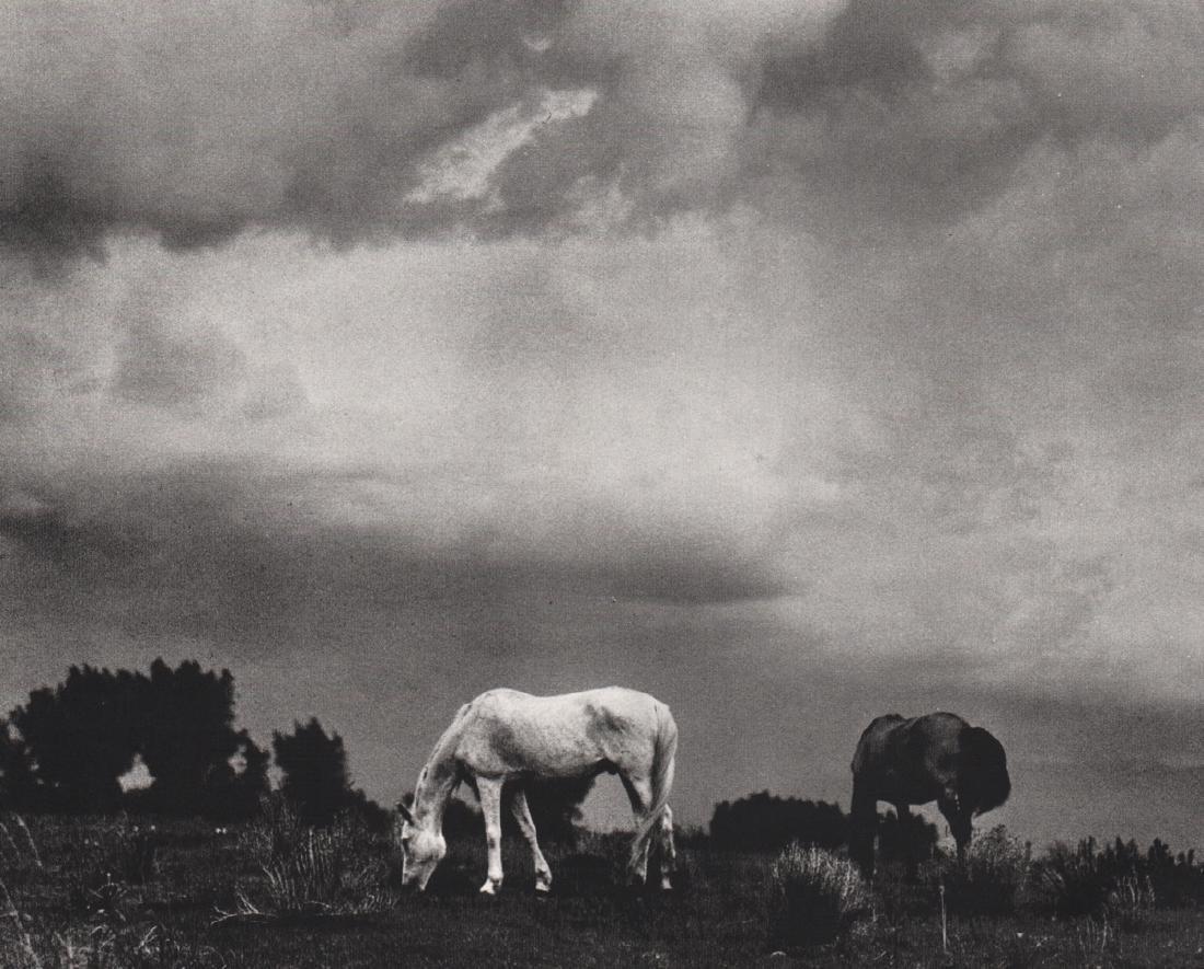 PAUL STRAND -  Grazing Horses, Taos NM, 1930
