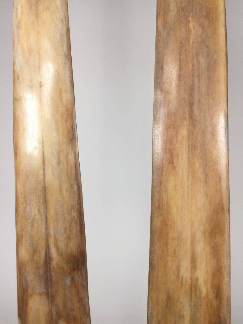 Fine Pair of Swordfish Tusks (Xiphias Gladius) - 4