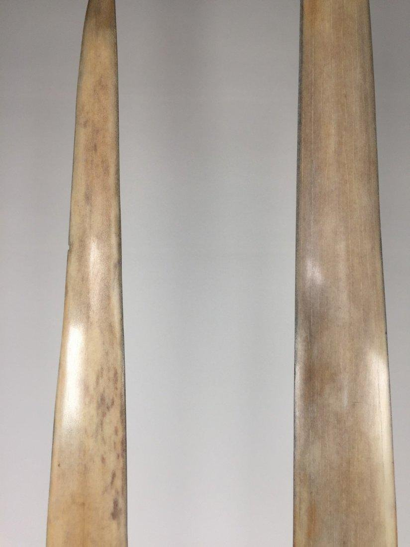 Fine Pair of Swordfish Tusks (Xiphias Gladius) - 5