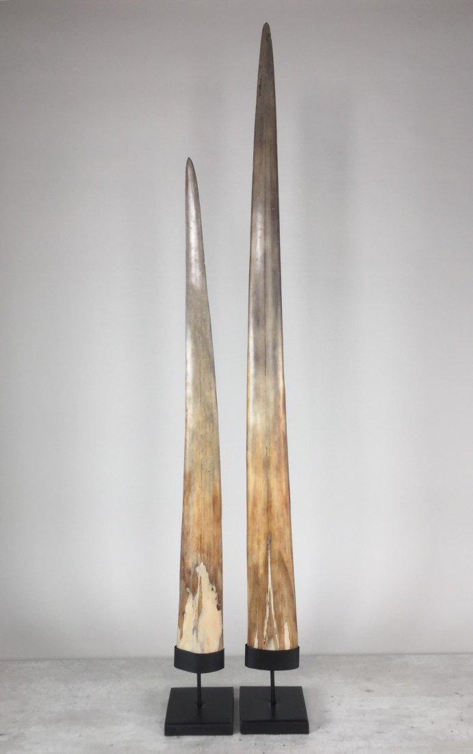 Fine Pair of Swordfish Tusks (Xiphias Gladius) - 7