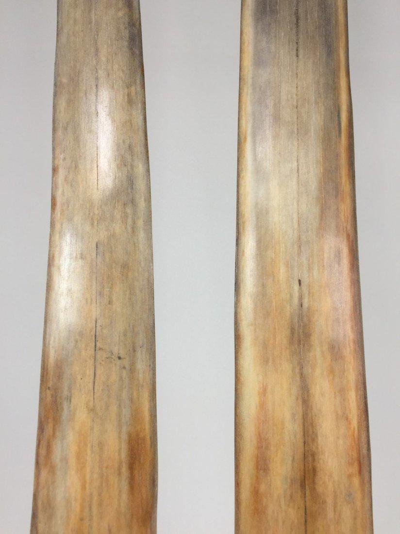 Fine Pair of Swordfish Tusks (Xiphias Gladius) - 9