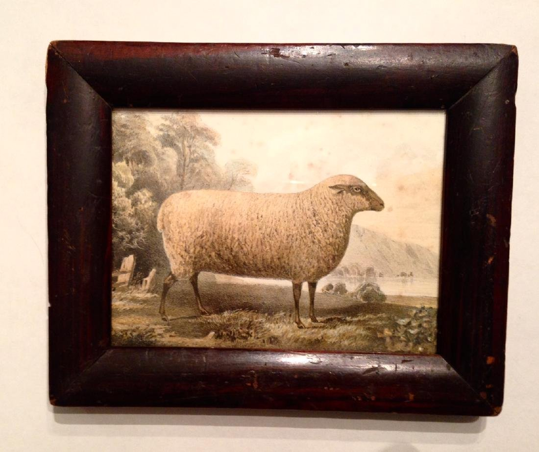 19thc Hand Colored Sheep Engraving in a Period Frame.