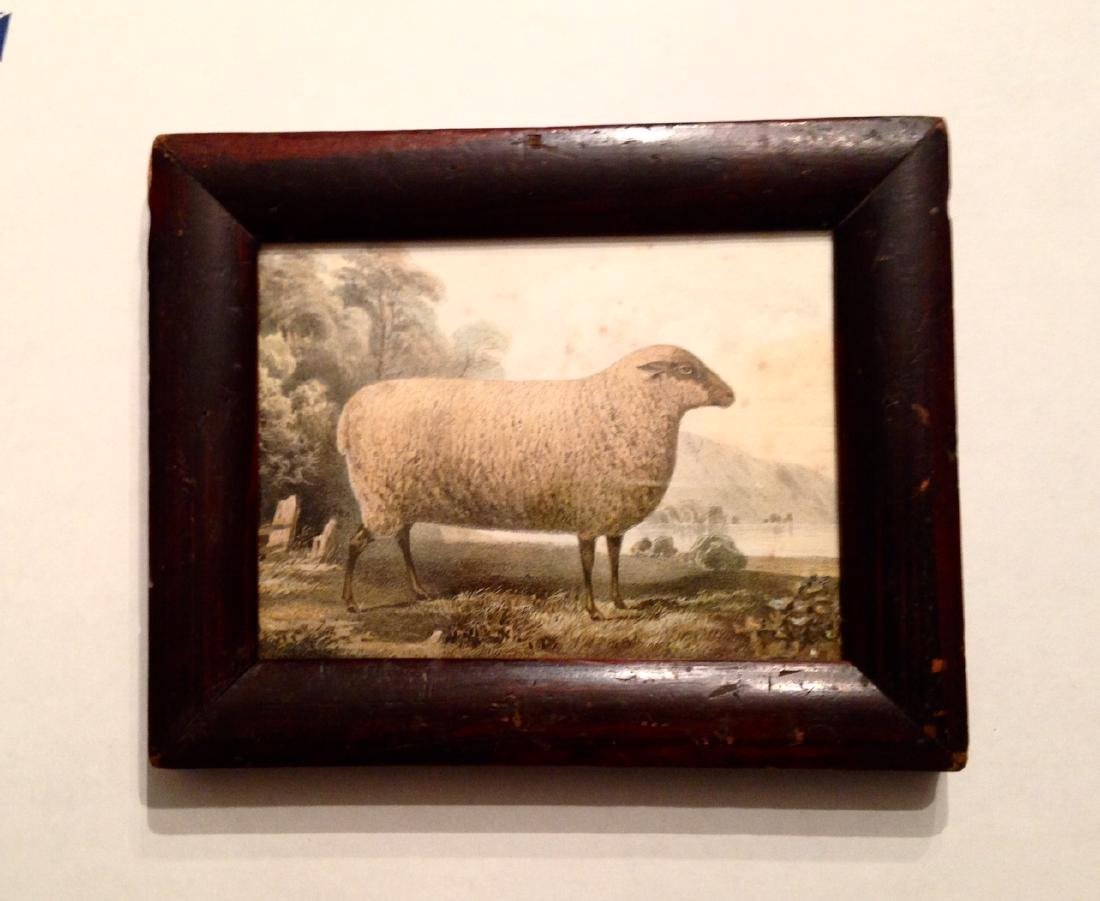 19thc Hand Colored Sheep Engraving in a Period Frame. - 3