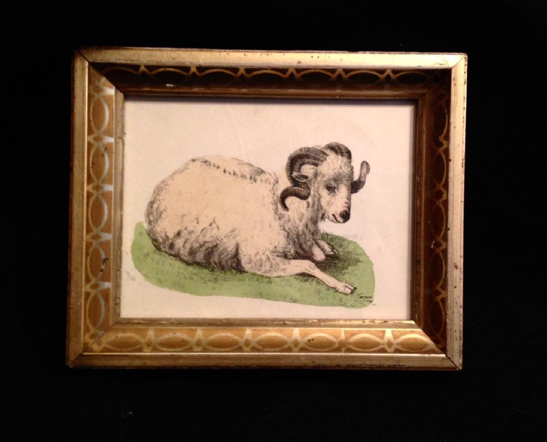 1855 Hand Colored Goat Engraving 19thc Gold Leaf Frame.