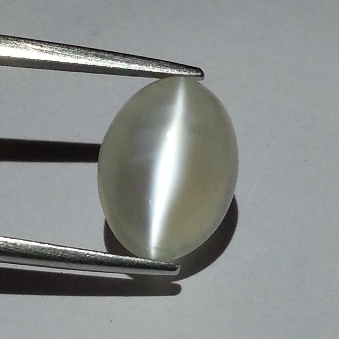 Moonstone Cat's Eye - 4.63 ct - 2