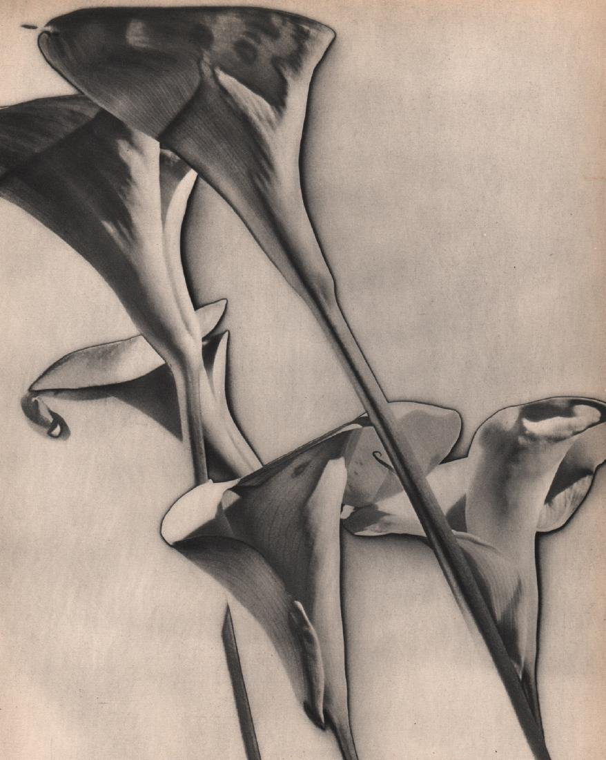 MAN RAY -  Calle Lilies, 1930
